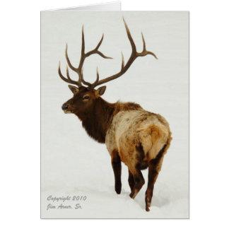 Bull Elk in Wyoming Card