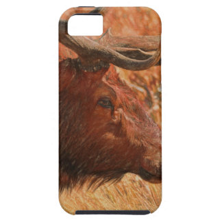 Bull Elk iPhone 5 Covers