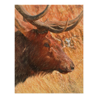 Bull Elk Letterhead