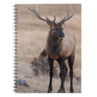 Bull Elk or Wapiti Notebook
