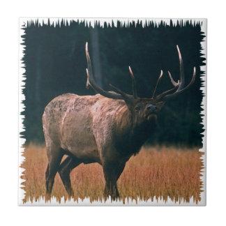 Bull Elk Photo Tile