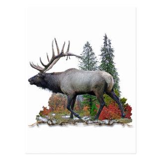 Bull Elk Postcard