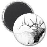 Bull Elk Refrigerator Magnets