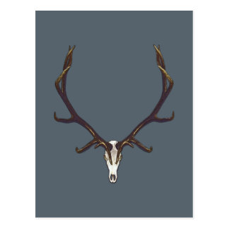 Bull elk skull color postcard