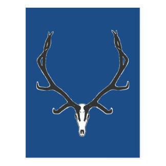 Bull elk skull European mount, bw Postcard