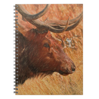 Bull Elk Spiral Notebooks