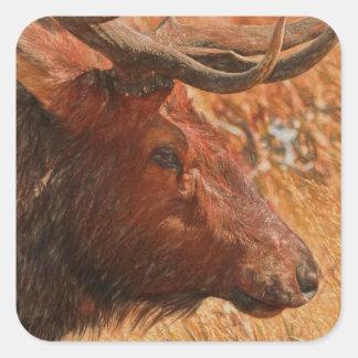 Bull Elk Square Sticker