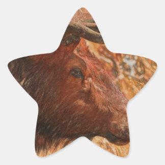 Bull Elk Star Sticker