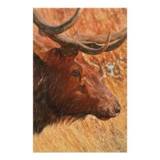 Bull Elk Stationery
