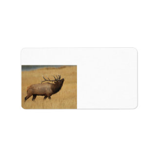 Bull Elk with Head Back Label