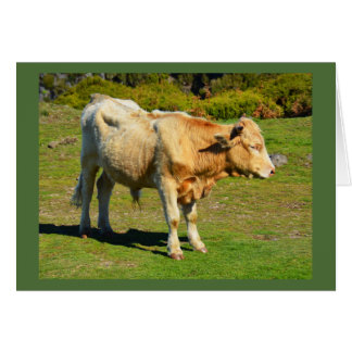 Bull in Madeira Greeting Card