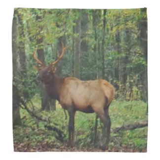 Bull Male Elk in autumn field Bandana