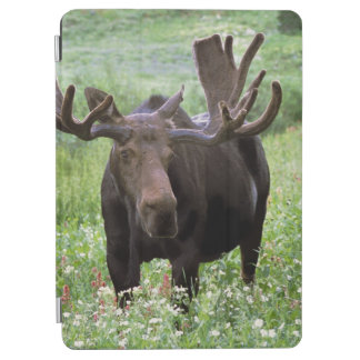 Bull moose Alces alces) in wildflowers, iPad Air Cover
