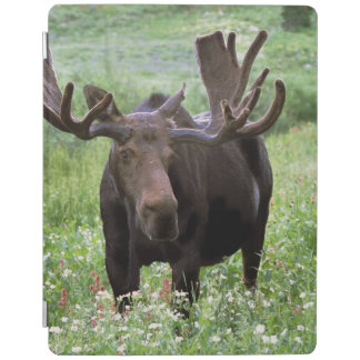 Bull moose Alces alces) in wildflowers, iPad Cover