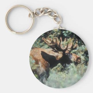 Bull moose basic round button keychain