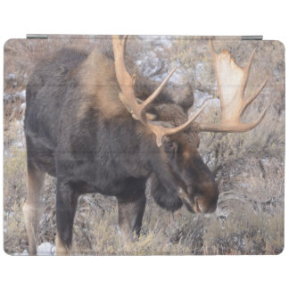 Bull Moose in field with Cottonwood Trees iPad Cover