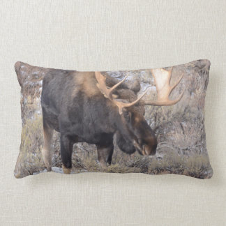 Bull Moose in field with Cottonwood Trees Lumbar Pillow