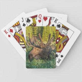 Bull moose in velvet, Colorado Playing Cards