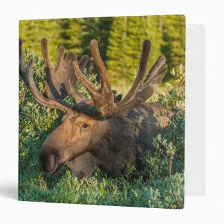 Bull moose in velvet, Colorado Vinyl Binders