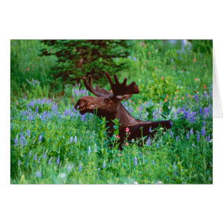 Bull Moose in Wildflowers Note Card