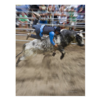 Bull rider thrown off bull postcard