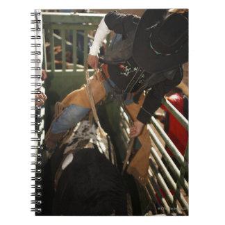 Bull rider tying rope on bull in the chute notebook