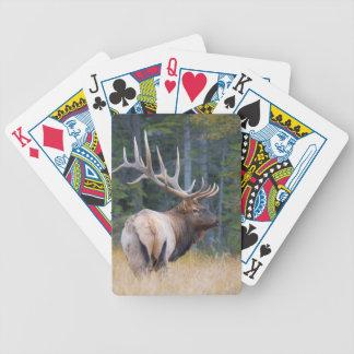 Bull Rocky Mountain Elk Card Decks