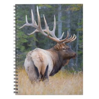 Bull Rocky Mountain Elk Spiral Note Book