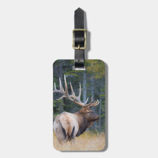 Bull Rocky Mountain Elk Tag For Bags