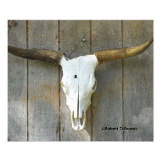 Bull Skull on a wall close up Photo Enlargement