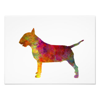 Bull terrier in watercolor photo print