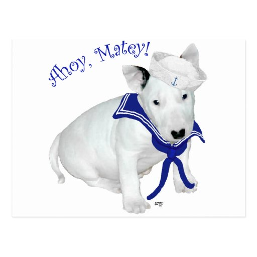 Bull Terrier Puppy Sailor Postcard