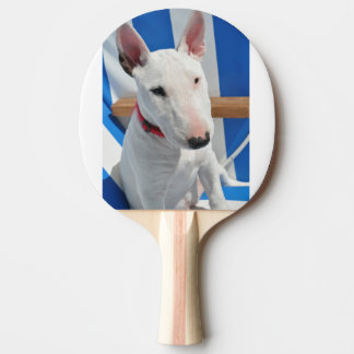 bull-terrier-sitting Ping-Pong paddle