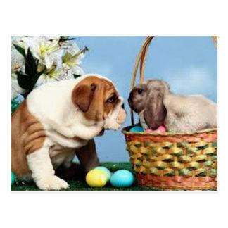 Bulldog and Rabbit Postcard