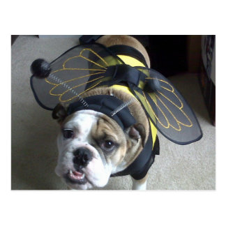 Bulldog Bee Postcard