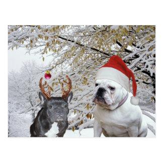 Bulldog Christmas 2 Postcard