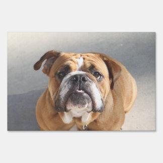 Bulldog Face - English Bulldog, Brown Sign