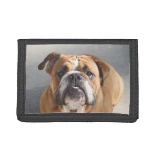 Bulldog Face - English Bulldog, Brown Trifold Wallets