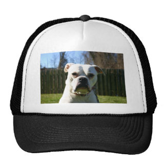 Bulldog Face Trucker Hat