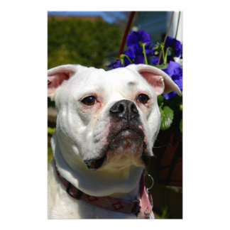 Bulldog Flowers Stationery Design