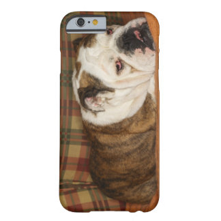 bulldog lying on a sofa barely there iPhone 6 case