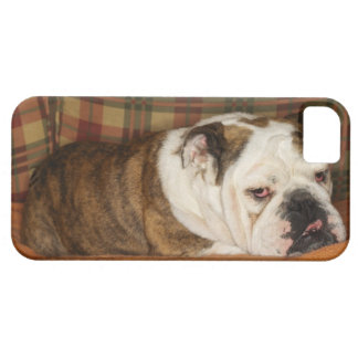 bulldog lying on a sofa iPhone 5 cover