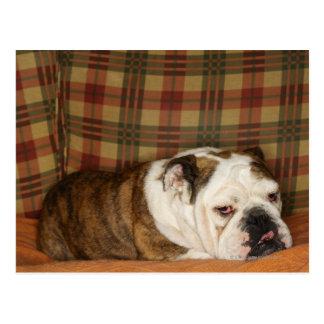 bulldog lying on a sofa postcard