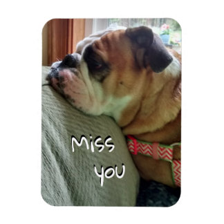 "Bulldog ""Miss you"" Magnet 38"