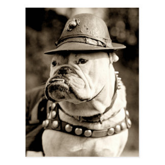 Bulldog on patrol wearing hat and cape postcard