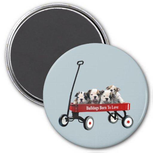 Bulldog Puppies In Wagon Magnet