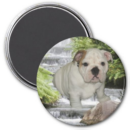 Bulldog Puppy Magnet Waterfall