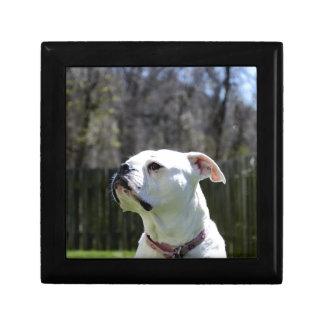 Bulldog Side Jewelry Boxes