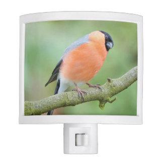 Bullfinch bird nite lights