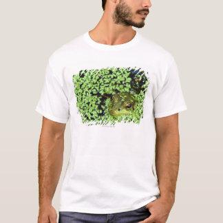 Bullfrog (Pyxicephalus adspersus) in duckweed T-Shirt